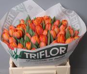 Тюльпаны оптом Кемерово к 8 марта 2016