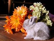продам декоративных кроликов пепельного окраса,  2мес. максимальный рос